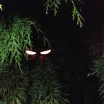 Eerie glow stick halloween eyes